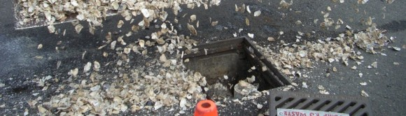 Oyster Shells in Catch Basin to remove metals